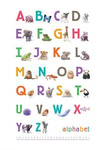 Zebra Wall Stickers illustrated animals bright alphabet print by little blue