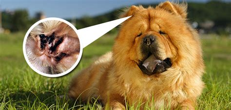 how to treat mites on dogs how to treat my s ear mites the best of 2017