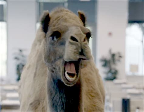 geico camel commercial hump day who is that actor actress in that tv commercial geico
