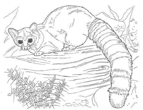 desert animals free coloring pages