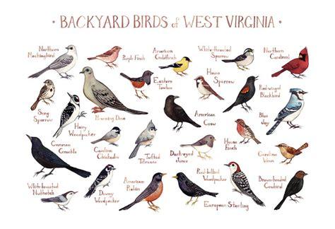 backyard birdsong guide west virginia backyard birds field guide art print
