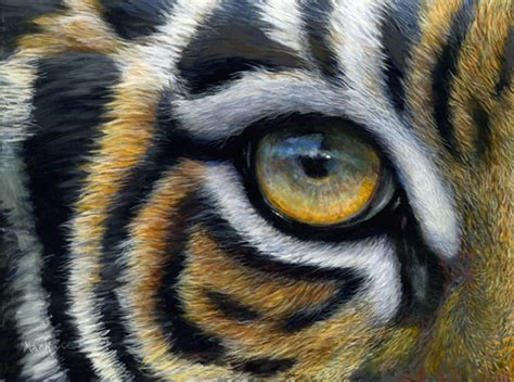 tiger eye painting www pixshark com images galleries with a bite