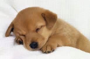 tag cute puppy pictures print litle pups