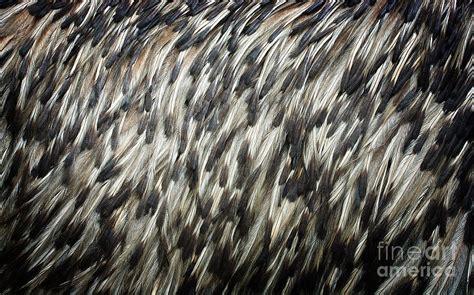 Penguin Light Penguin Feather Texture