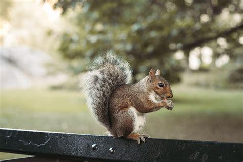 eichhörnchen in der wohnung josie fashion reise lifestyle part 3