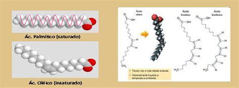 lipidos cadenas abiertas qu 237 mica 1 l 237 pidos estructura clasificaci 243 n
