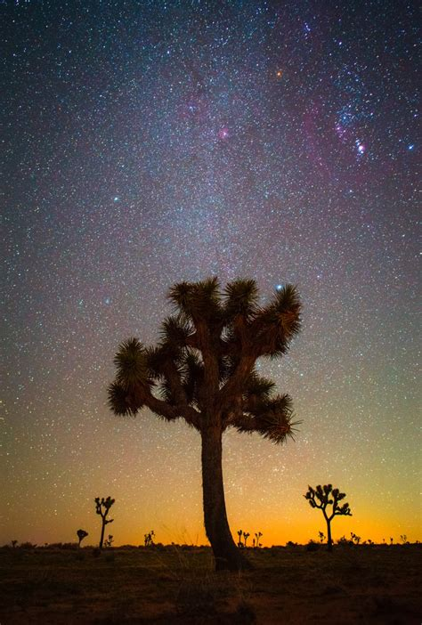 National Hijau 20mm 20 Mm rokinon 20mm f 1 8 astrophotography review joshua tree national park lonely speck