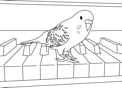 parakeet coloring pages my parakeet clarabelle