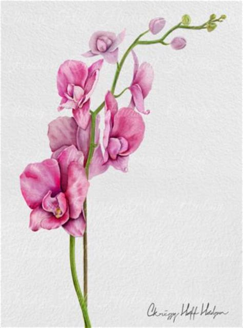 watercolor orchid tattoo 17 best ideas about gladiolus on august