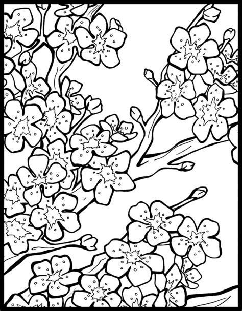 cherry blossom coloring pages clipart best