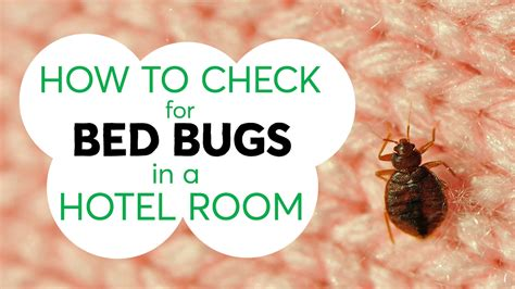 check  bed bugs   hotel room consumer reports youtube