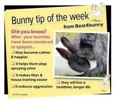 Must For The Week The House Bunny by 1000 Images About Fiensheldon Things Ideas For