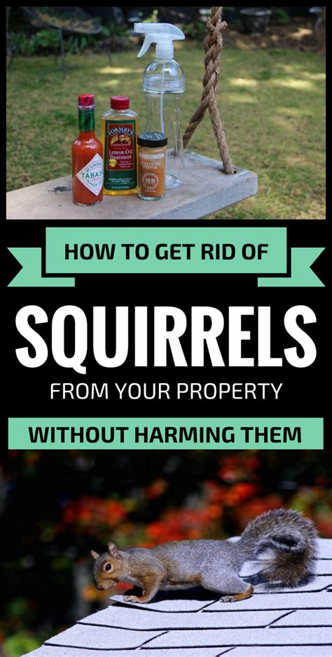 how to get rid of squirrels in the backyard squirrels how to get rid of squirrels in the garden the