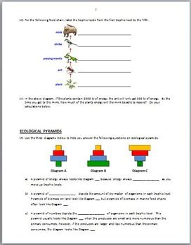 Food Chain Trophic Levels Worksheet Answers by Food Chains Review Worksheet Editable By Tangstar
