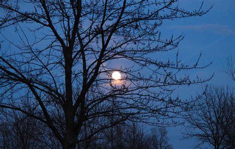 moon light through trees photograph by rachel cohen