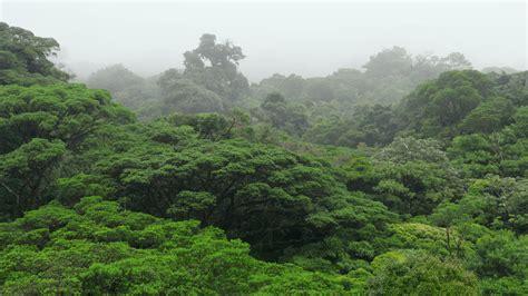 la selva de sara la selva tropical nubosa en planeta selva rtve es