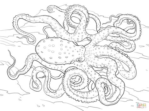 octopus coloring page adults realistic detailed atlantic white spotted octopus hard
