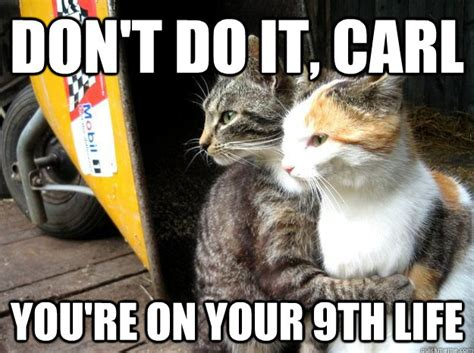 Don T Do It Meme - don t do it carl cat meme cat planet cat planet