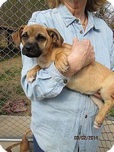 pug puppies albany ny adopt me