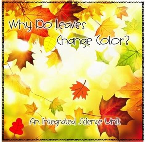 what causes the leaves to change color in the fall fall science why do leaves change colors experiments
