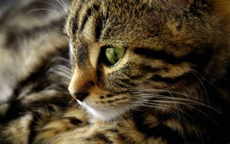 Wallpaper 3d Kucing | nice cats wallpaper kucing