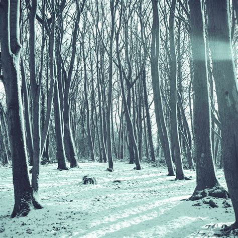 Cold Winter Essay by Large