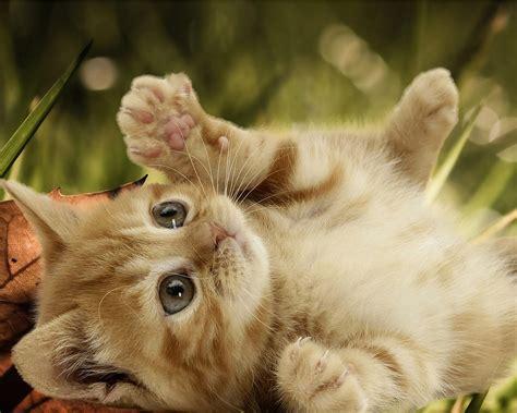 imagenes tiernas gatitos bebes leidy cevallos fotos de gatitos bebes