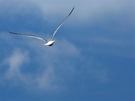 quanto vive un gabbiano irene vive liberi di volare