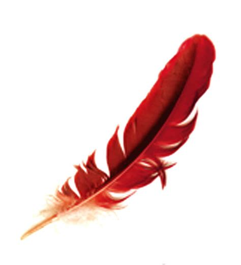 the gallery for gt red feather clipart
