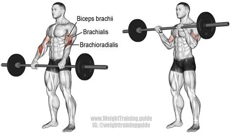 bench press with ez curl bar barbell reverse curl an isolation exercise target muscle