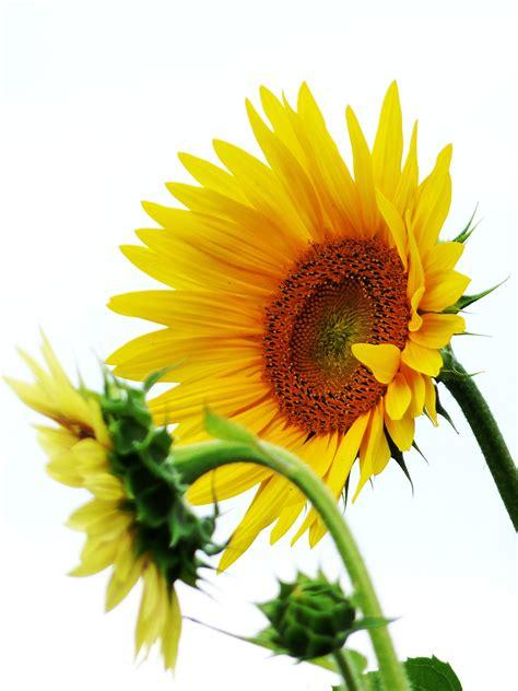 gambar alam menanam bidang daun bunga musim panas