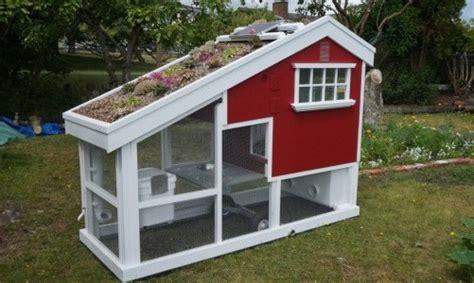 gabbie per galline ovaiole norma come costruire un pollaio artigianale in muratura o legno