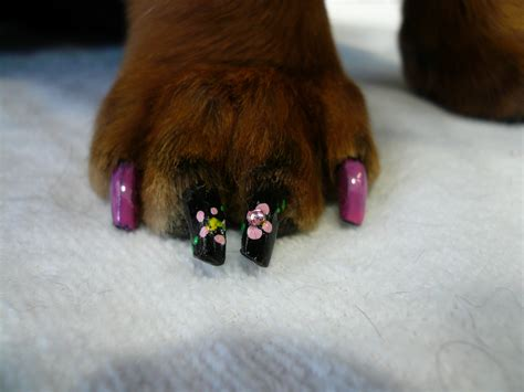 painting dogs nails at i started laughing at this but then i wasn t sure what to make of it