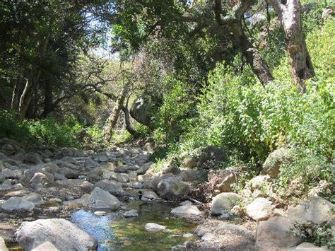 Santa Barbara Botanic Gardens Img 20160313 002256 Large Jpg Picture Of Santa Barbara Botanic Garden Santa Barbara Tripadvisor