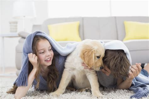 getting a new puppy puppy supplies and top 5 things to consider before bringing fido home