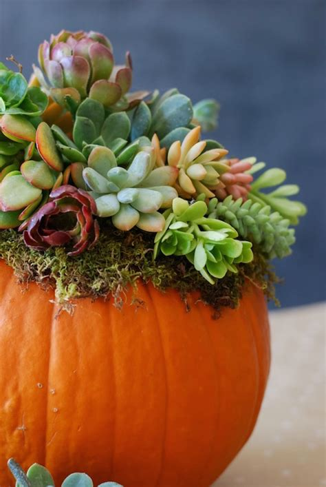 stunning fall floral arrangements  pumpkins gourds