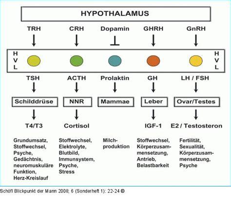 psa wert tabelle abbildung 1 hypothalamus hypophysen system