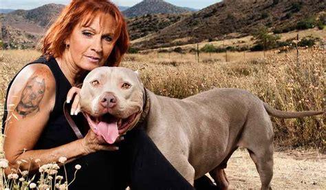 pitbulls and parolees dogs pit bulls and parolees torres save pitbulls pitbull tv show