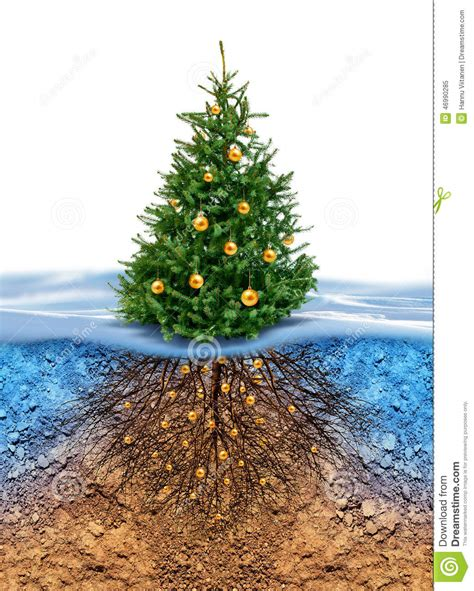 green christmas tree with roots beneath stock illustration