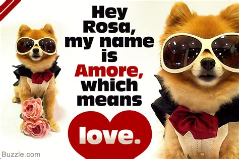 italian puppy names and sweet italian names and their meanings