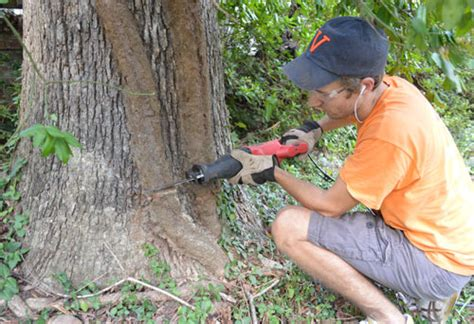 Sliced Eat Sticky Notes Post Its Penanda Dokumen Dan Memo cutting back and removing an overgrown vine from a tree house