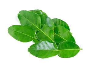 apsara s kaffir lime leaves