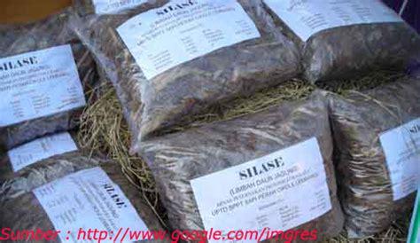 Alat Pemotong Rumput Pakan Sapi pakan ternak sapi media penyuluhan pertanian