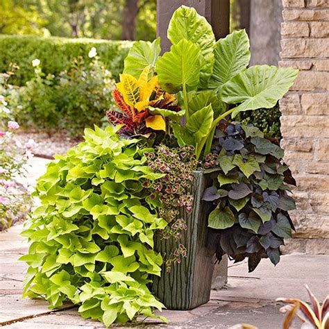 Best Plants For Patios by Best Tropical Flowers For Your Patio