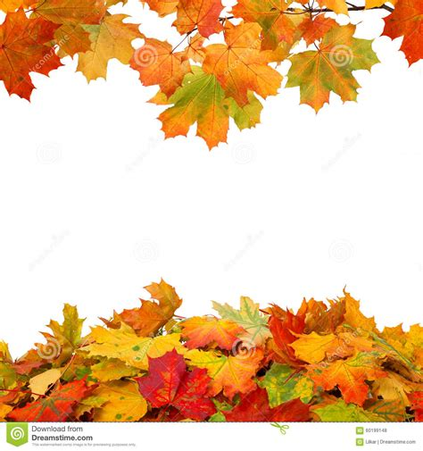 Autumn Leaves On White Background Stock Photo Image 60199148 Fall Leaves On White Background