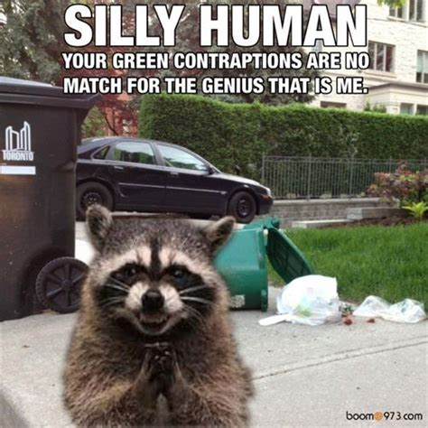 Garbage Meme - it s garbage day and the raccoon s couldn t be happier