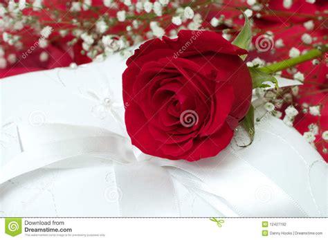 foto sul cuscino rosa rossa sul cuscino bianco fotografia stock immagine