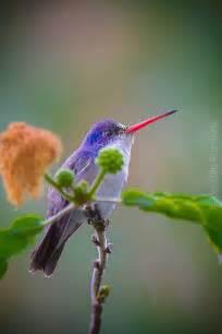 colorful hummingbirds colorful hummingbird colibr 237 es