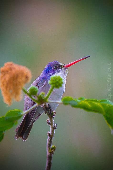 colorful hummingbirds colorful hummingbird