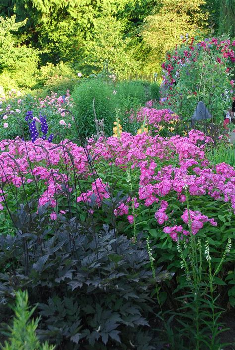 cottage garden plants cottage gardens plants 28 images top 10 plants for a